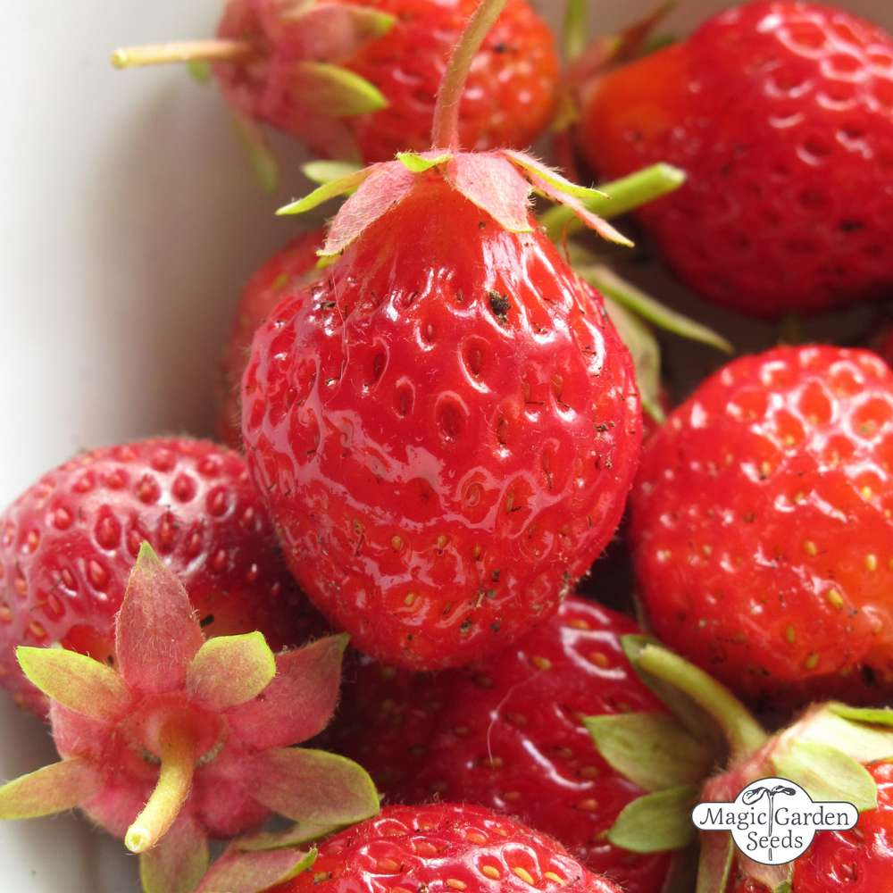erdbeeren nuss